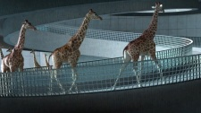 5m80 Nicolas Deveaux / France / 2012 / animation 3D / 5 min 25